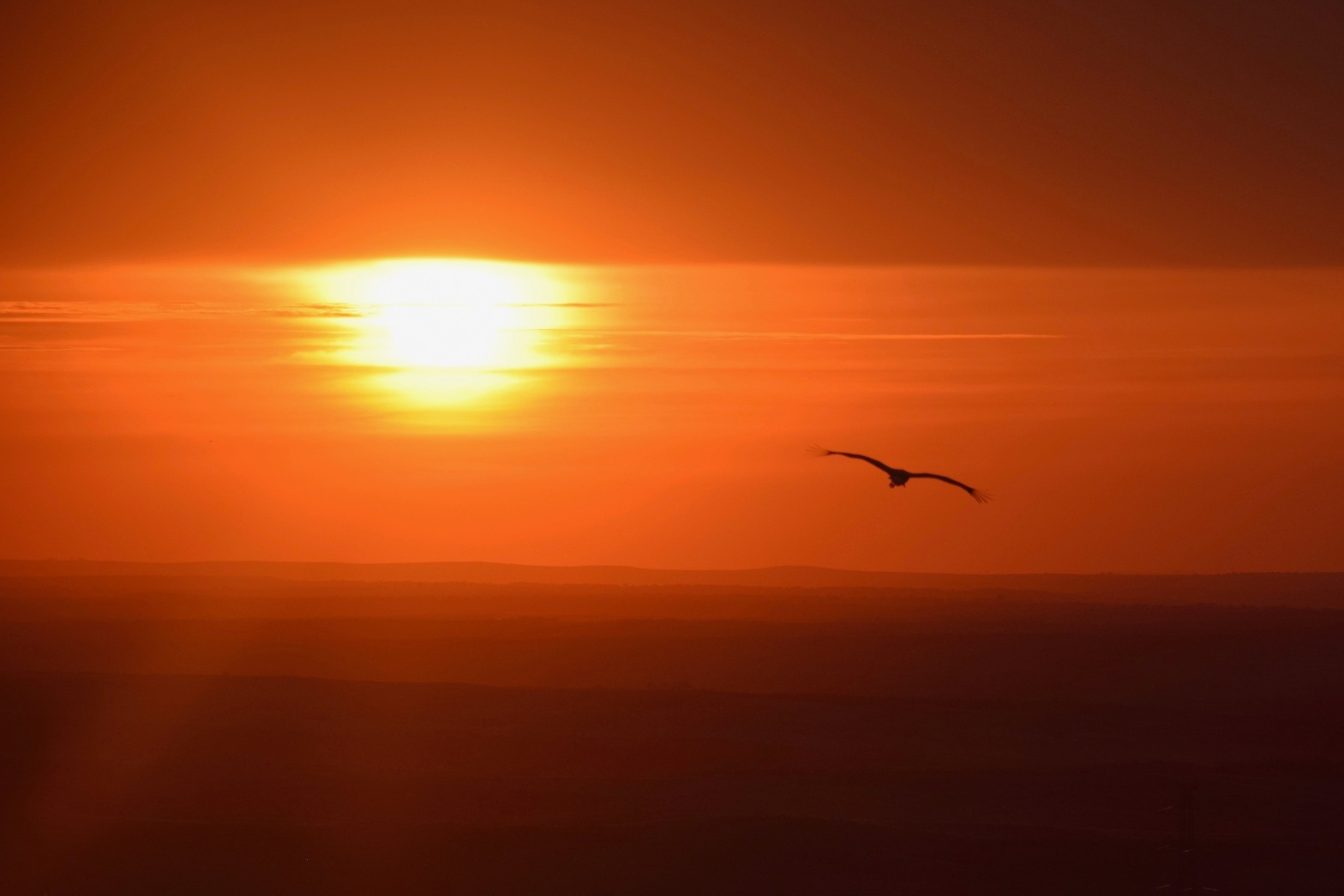 Stork flying into the sunset over Trujillo