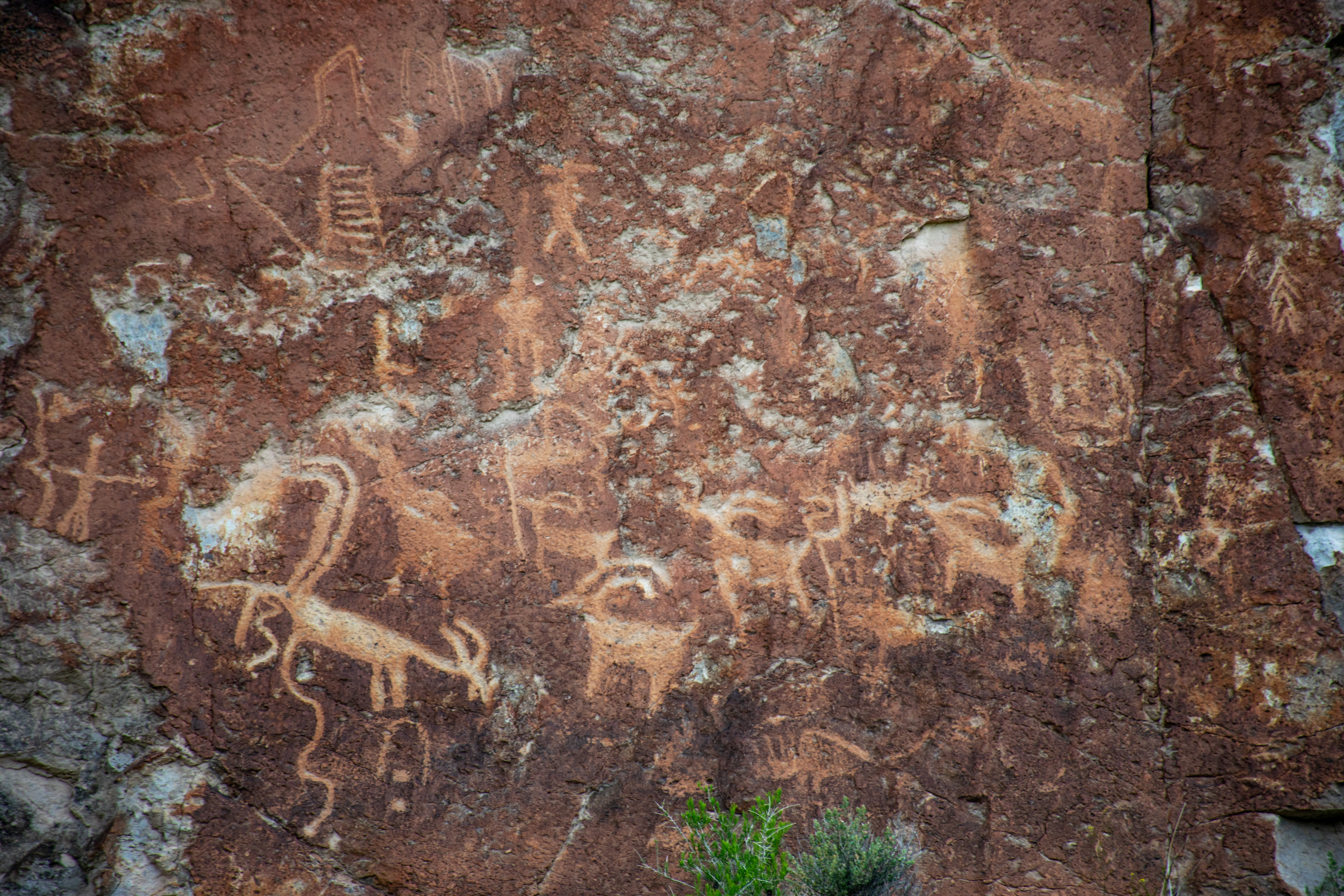 A herd of antelope in a drawing on a rock wall